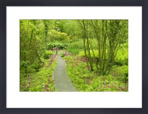 Fairhaven Garden, Norfolk by Richard Osbourne