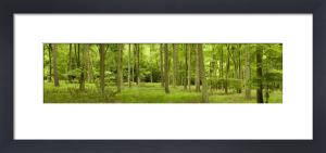 Spring In Thetford Forest, Norfolk by Richard Osbourne