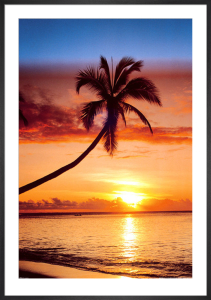 Sunset & Palm tree by Anonymous