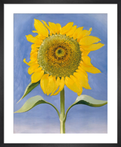 Sunflower, New Mexico, 1935 by Georgia O'Keeffe