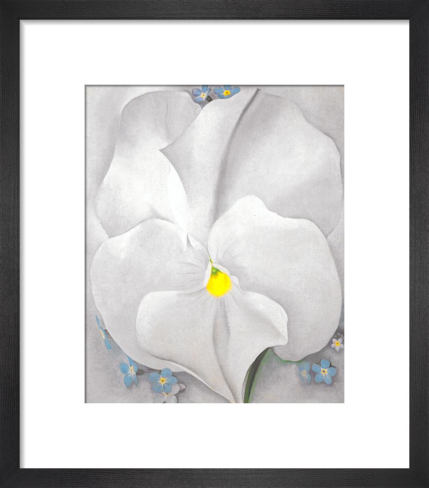 White Pansy by Georgia O'Keeffe