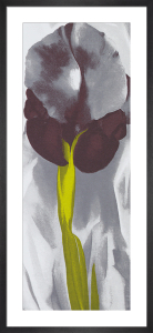 Dark Iris, 1927 (Silkscreen print) by Georgia O'Keeffe