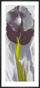 Dark Iris, 1927 (Silkscreen print) by Georgia O'Keeffe