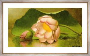 Lotus Blossom, 1885-95 by Martin Johnson Heade