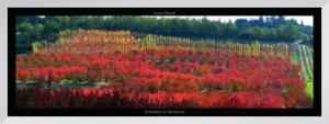 Automne en Provence by Laurent Pinsard