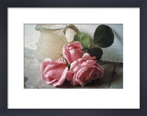 Rosa by Den Reader