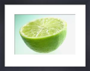 Citrus aurantiifolia, Lime by Clive Holmes Ltd