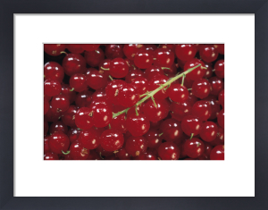 Redcurrant by Rosemary Calvert