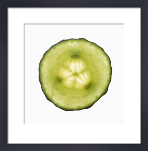 Cucumis sativus, Cucumber by Carol Sharp