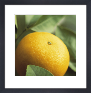 Citrus paradisi, Grapefruit by Carol Sharp