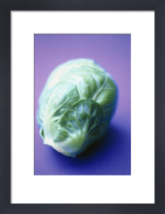 Brassica oleracea bullata, Brussel sprout by Carol Sharp
