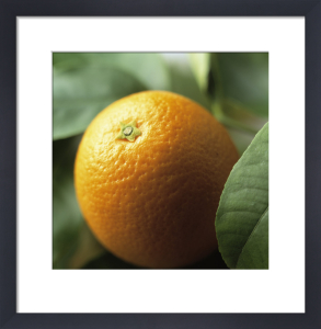Citrus sinensis, Orange by Carol Sharp