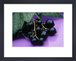 Ribes nigrum, Currant - Blackcurrant by Ewa Ohlsson