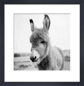 Jack the Donkey by Mirrorpix
