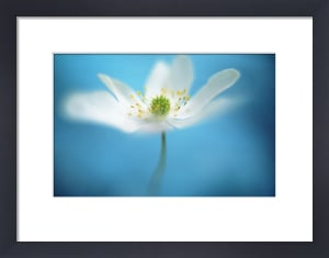 Anemone by Mike Bentley