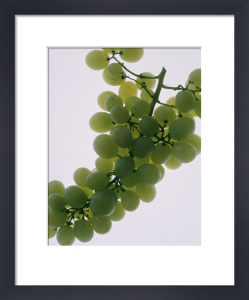 Vitis vinifera, Grape by Richard Freestone