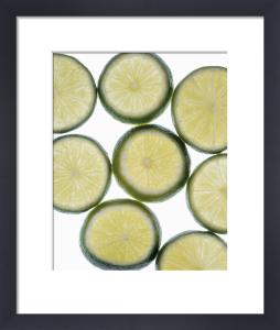 Citrus aurantiifolia, Lime by Richard Freestone