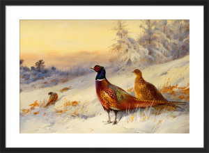 Cock & Hen Pheasant In The Snow by Archibald Thorburn