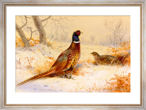 Cock & Hen Pheasant by Archibald Thorburn