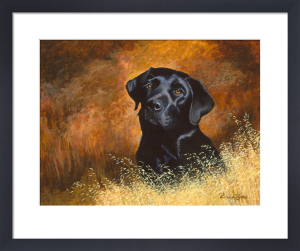 Black Labrador by Richard Britton