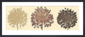 Allium Trio by Julie Lavender