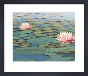 Lily Pool by Adam Brock