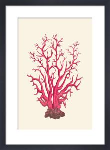 Coral Seas II by Maria Mendez