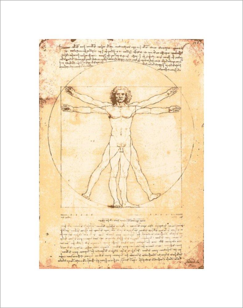 Vitruvian Man Art Print by Leonardo da Vinci | King & McGaw
