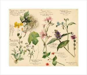 Wild Flowers Composite (Tunbridge Wells) by Lillian Snelling