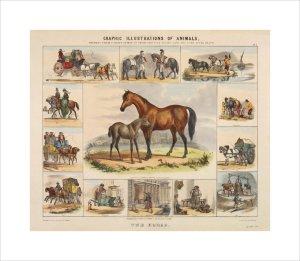 The Horse by Benjamin Waterhouse Hawkins